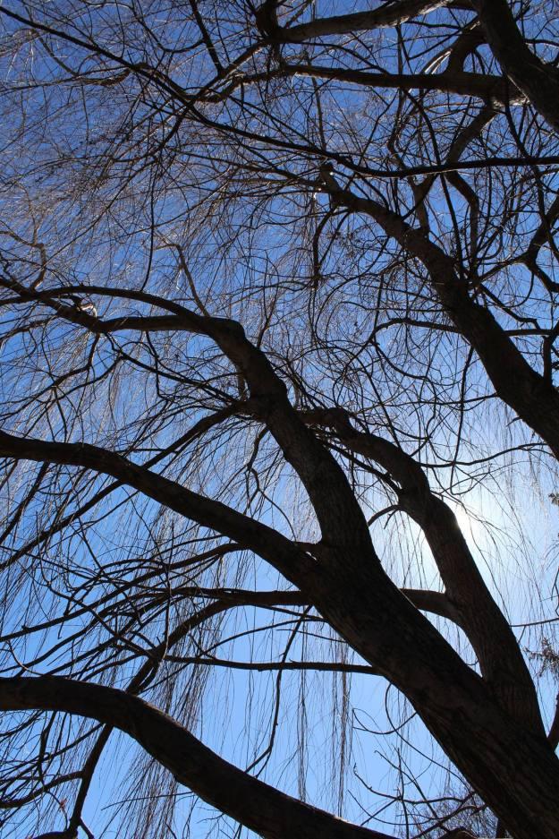 Ashbridge-Estate-March-2015-Diane-Walton-photo