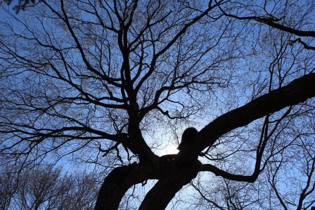 Ashbridge-Estate-March-2015-Diane-Walton-photo3